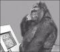 1KGorilla.com = Finding TechTalent