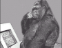 1KGorilla.com = Finding Tech Talent